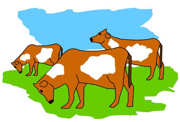 600x407 Cow Clipart Herd Cattle