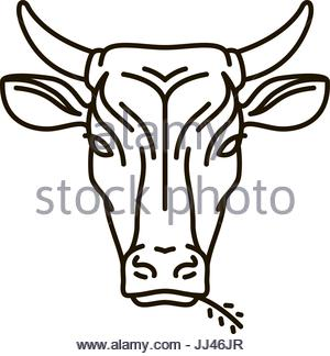 300x324 Cow Face Animal Outline Stock Vector Art Amp Illustration, Vector
