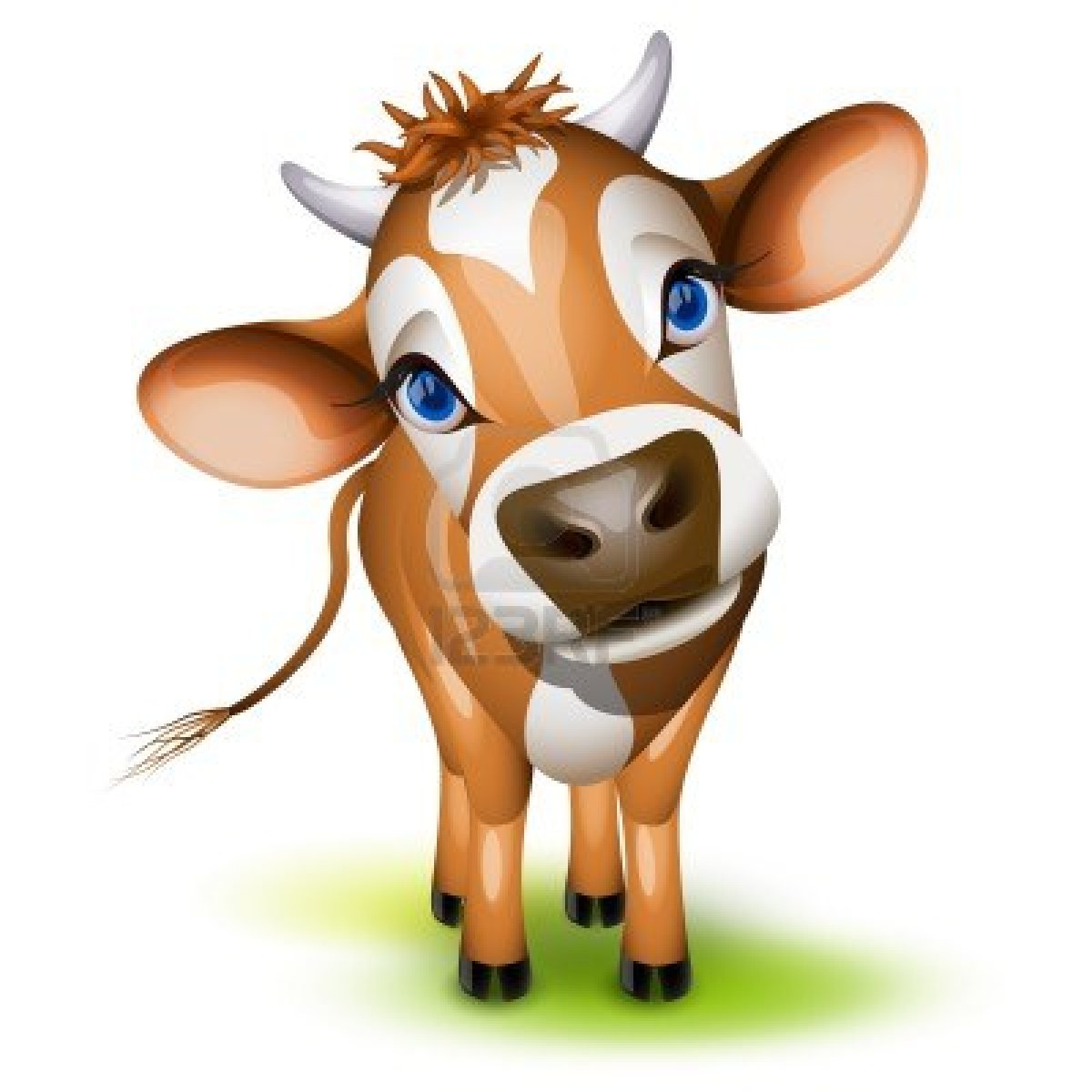 1200x1200 Little Jersey Cow With A Cocked Head And Blue Eyes Stock Photo