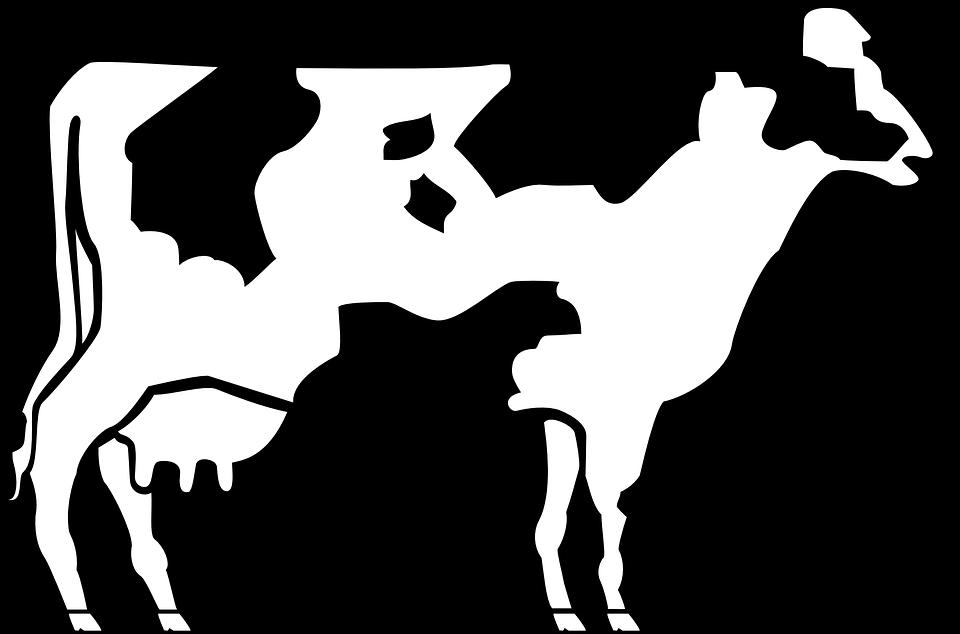 960x634 Top 22 Cow Clip Art