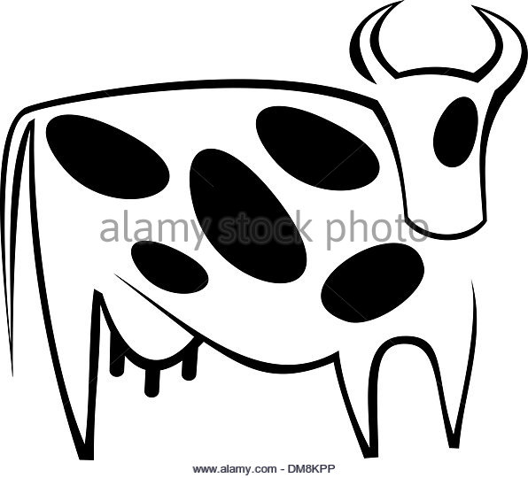 596x540 Beef Cow Black And White Stock Photos Amp Images