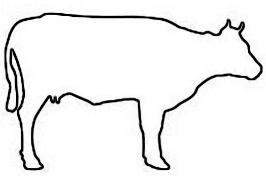 524x355 Outline Of A Cow