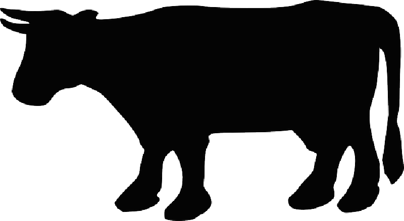 800x438 Animals, Head, Silhouette, Cartoon, Farm, Cow, Cattle