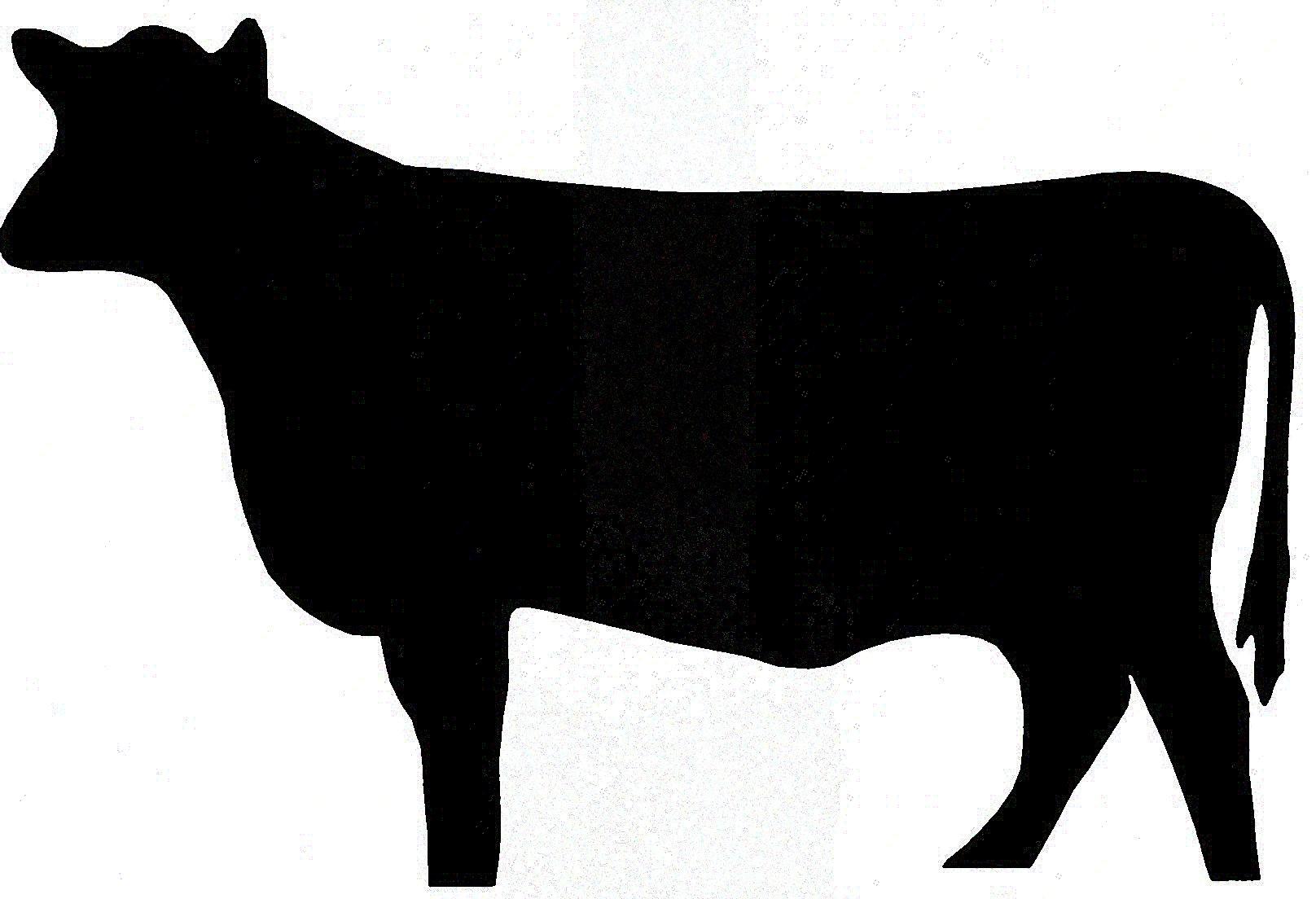 1616x1104 Unique Cow Head Silhouette Clip Art Library