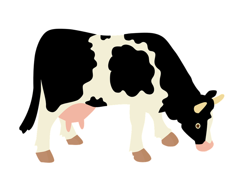 784x589 Dairy Cow Transparent Background Farm Image