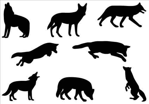 500x350 Coyote Clipart Black And White