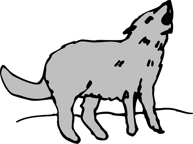 640x478 Gray, Cartoon, Art, Animal, Coyote, Howling