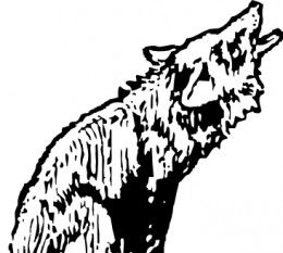 260x233 Coyote Free Vectors Ui Download