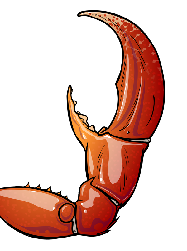Crab Pictures Free Download Best Crab Pictures On Clipartmag
