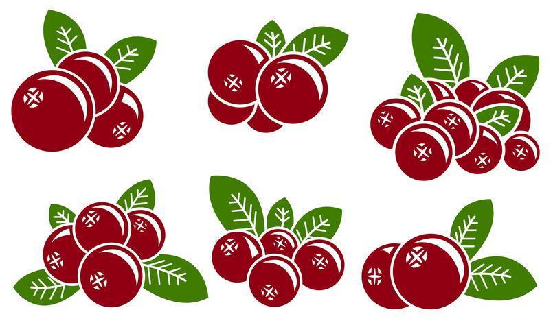 805x490 Cranberry Free Vector Art