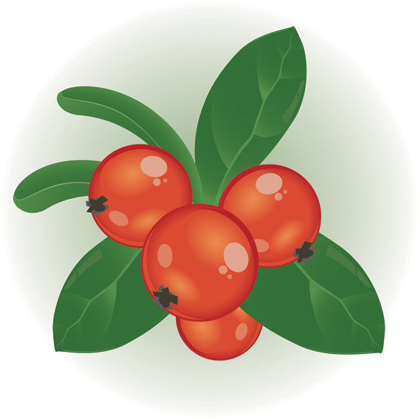 600x600 Cranberry Clipart Berry