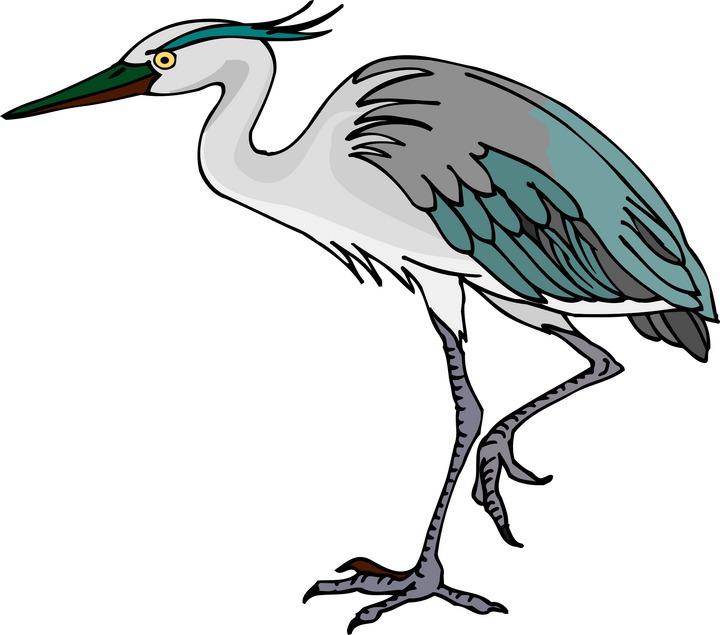 720x635 Bird Clipart Blue Crane