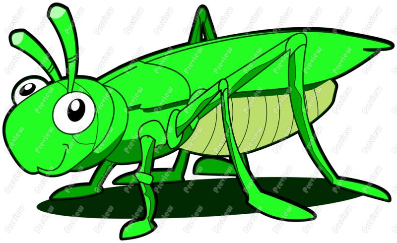 800x490 Cricket Clipart Grasshopper