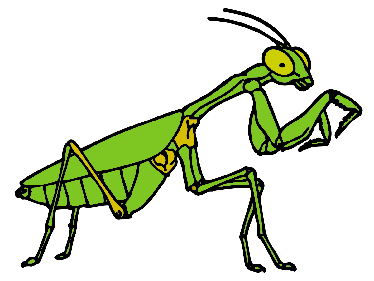 1200x900 Top 94 Praying Mantis Clip Art