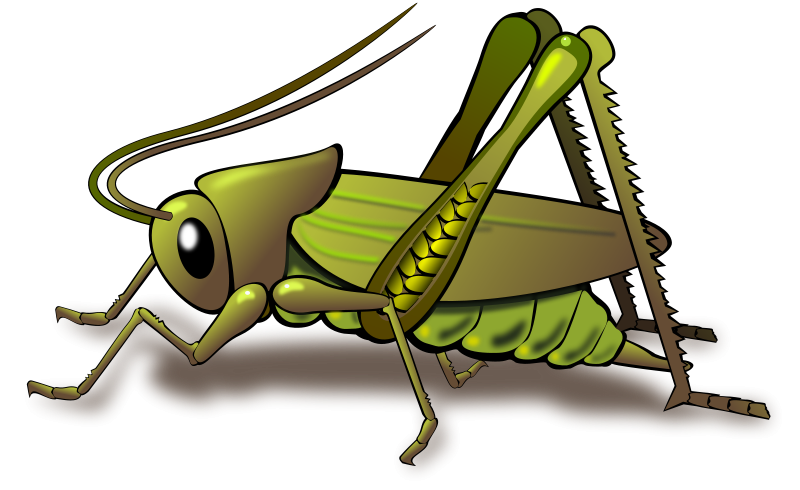 800x490 Cricket Insect Clipart Clipart Panda
