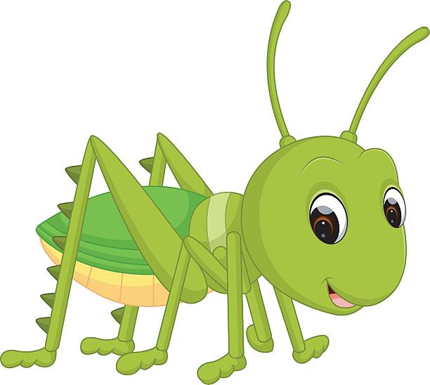 612x548 Cricket Clipart Animal