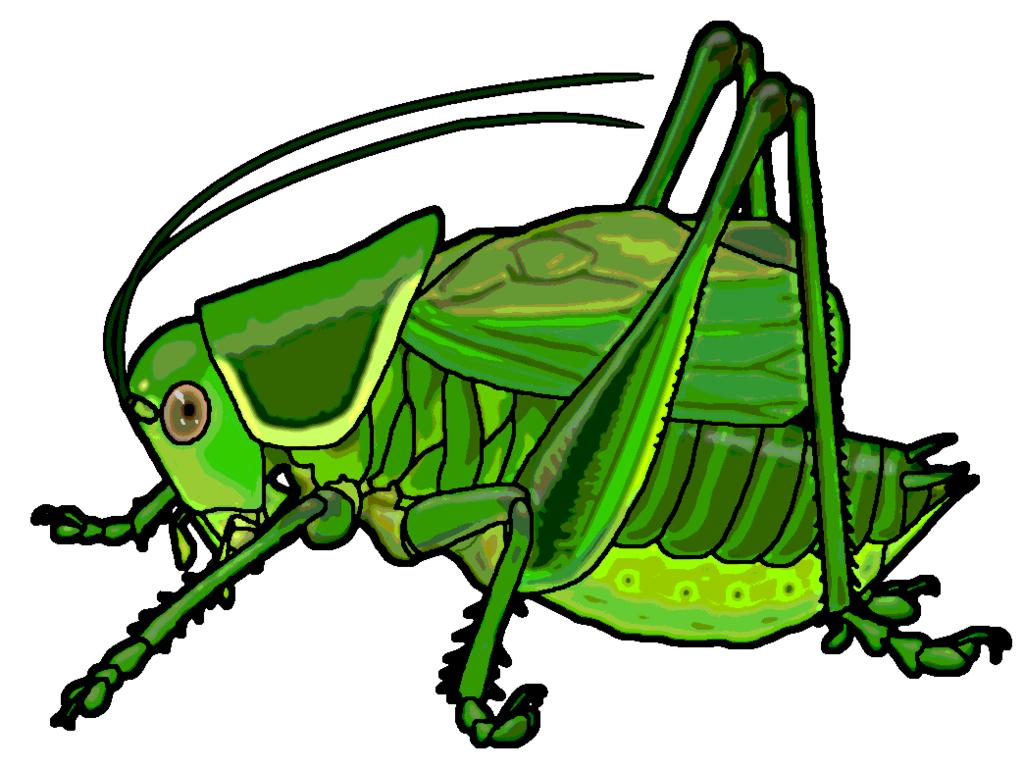 1024x769 Cricket Clipart Katydid