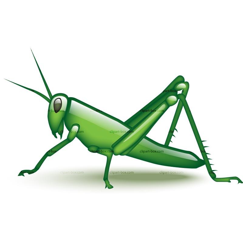 800x800 Top Grasshopper Clip Art Free Clipart Image 5