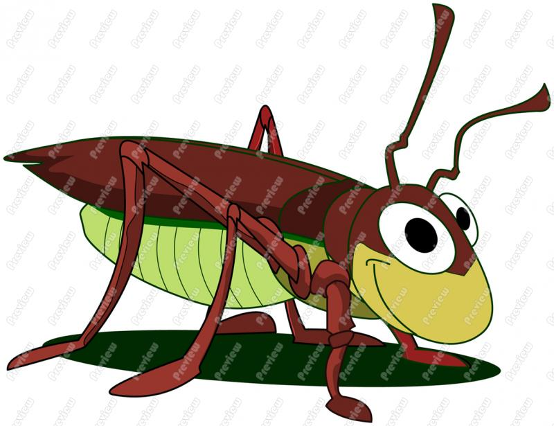 800x615 Cockroach Character Clip Art
