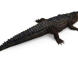 255x200 Reptile 3d Models