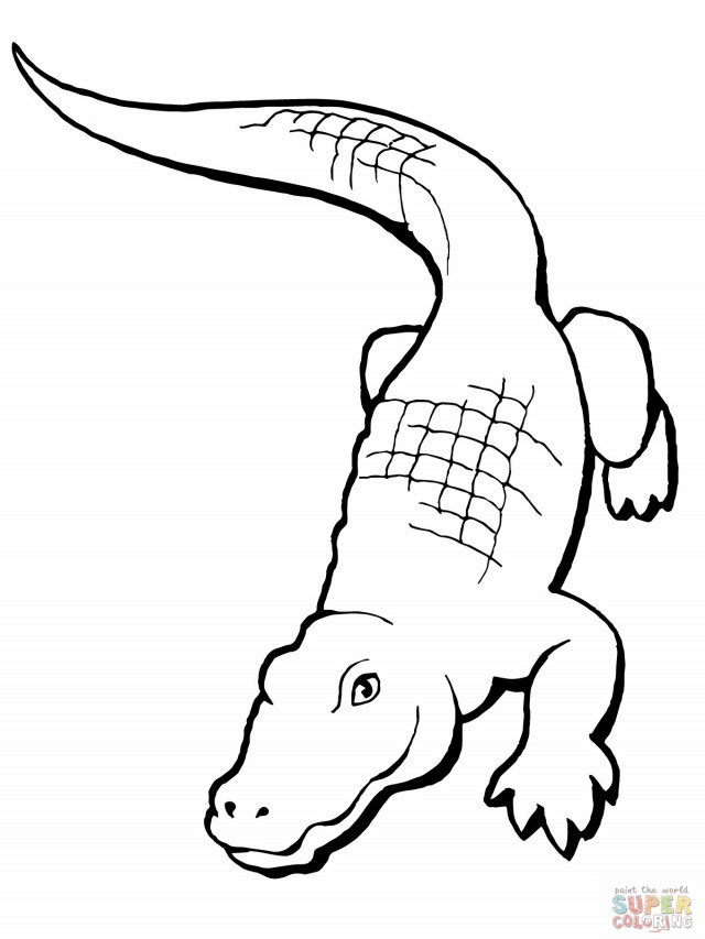 640x853 Caiman Clipart Black And White