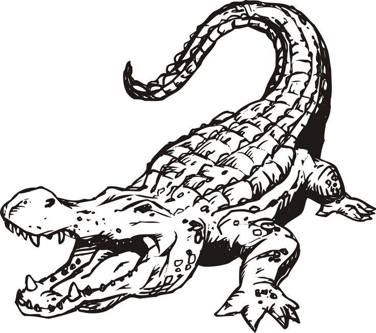 736x652 Drawn Crocodile Draw
