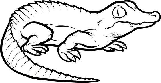 564x291 Small Crocodiles The Threatening Crocodiles Kids