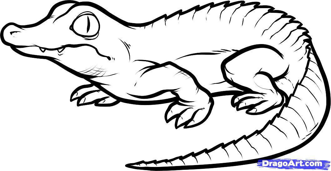 1059x547 Drawn Crocodile