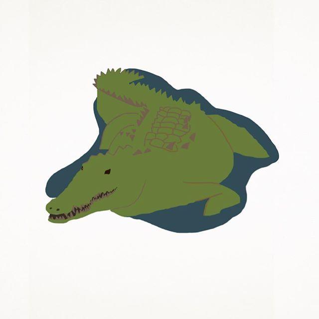640x640 616 Best Alligatorcrocodile Images