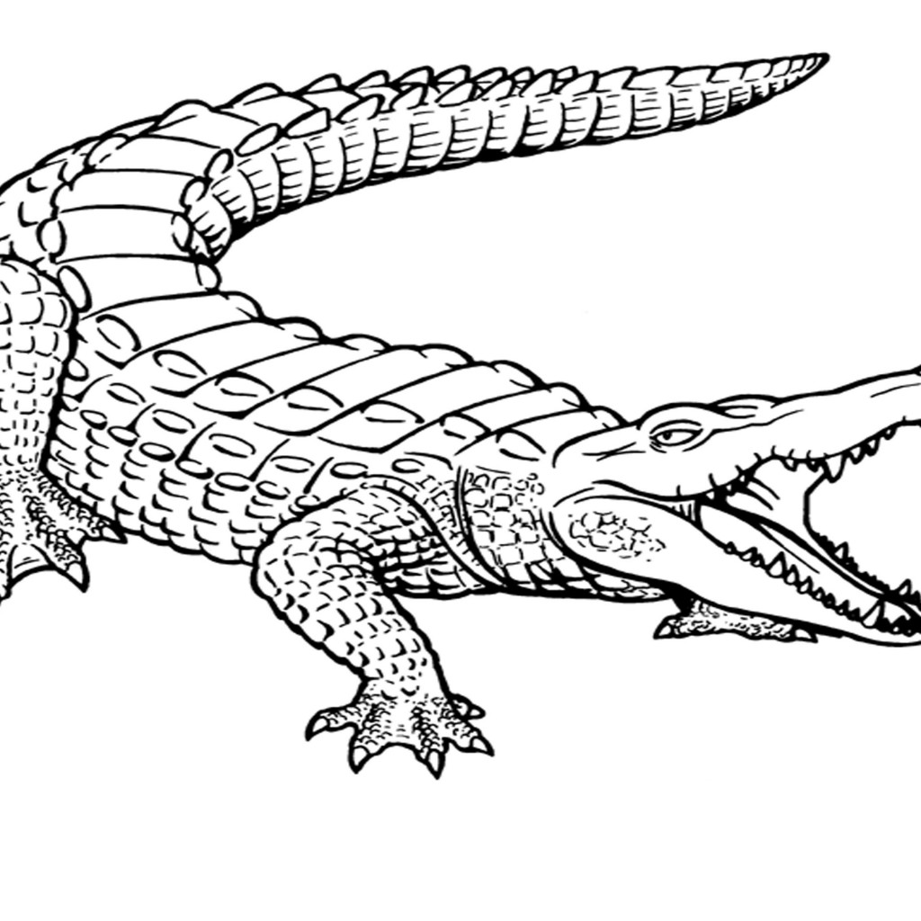 1024x1024 wild reptile crocodile coloring pages for kids