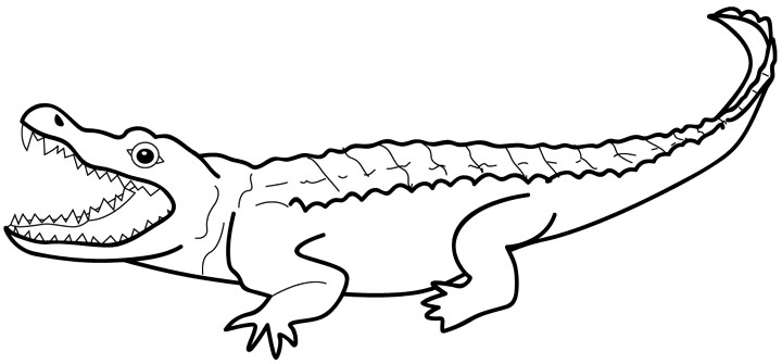 720x335 Crocodile Alligator Outline Clipart Kid
