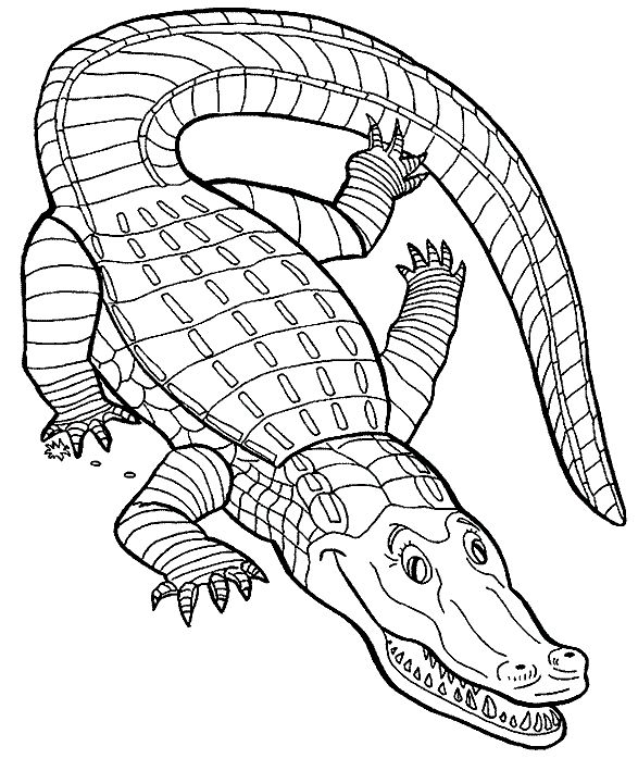 587x709 43 Best Crocodiles Images Printable, Coloring