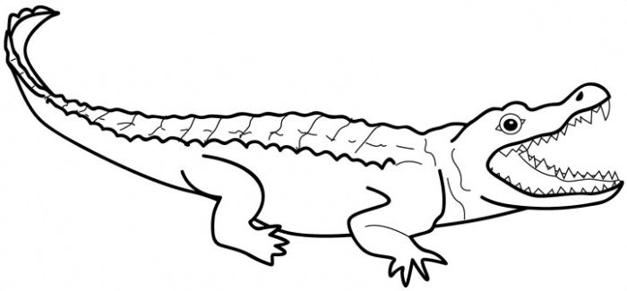 700x325 Crocodile Clipart Colouring Page