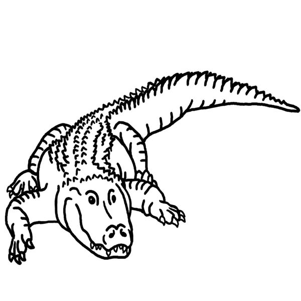 600x600 Drawn Crocodile Black And White