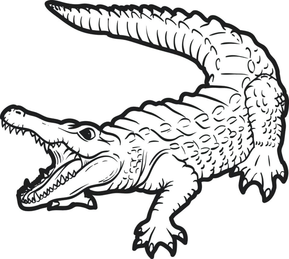 960x861 Vector Of A Cartoon Sewing Alligator Coloring Page Outline Pages