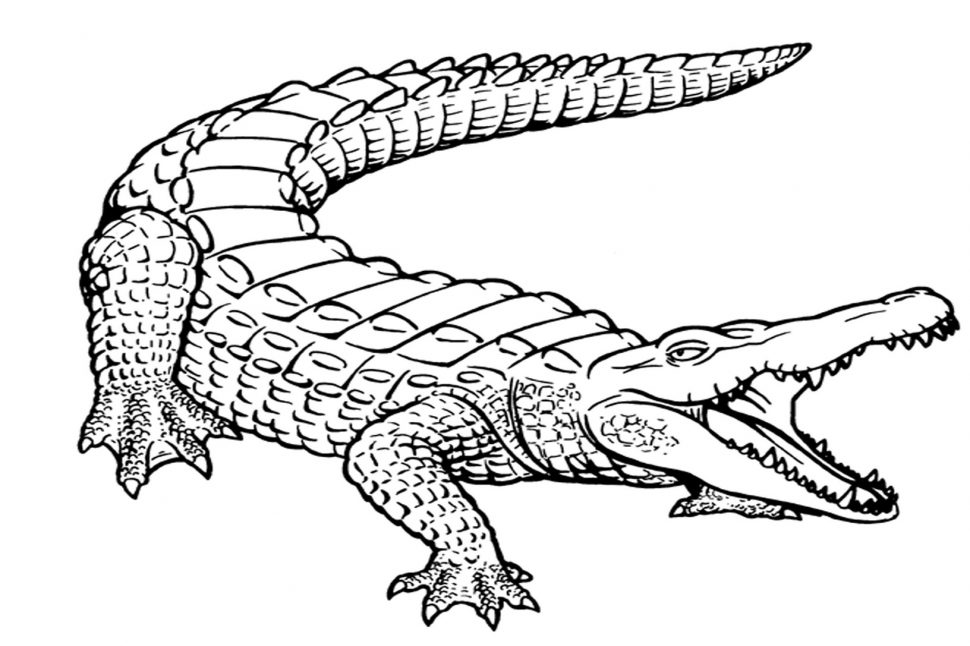 970x646 Coloring Pages Alligator Coloring Pages 2 Cartoon Crocodile