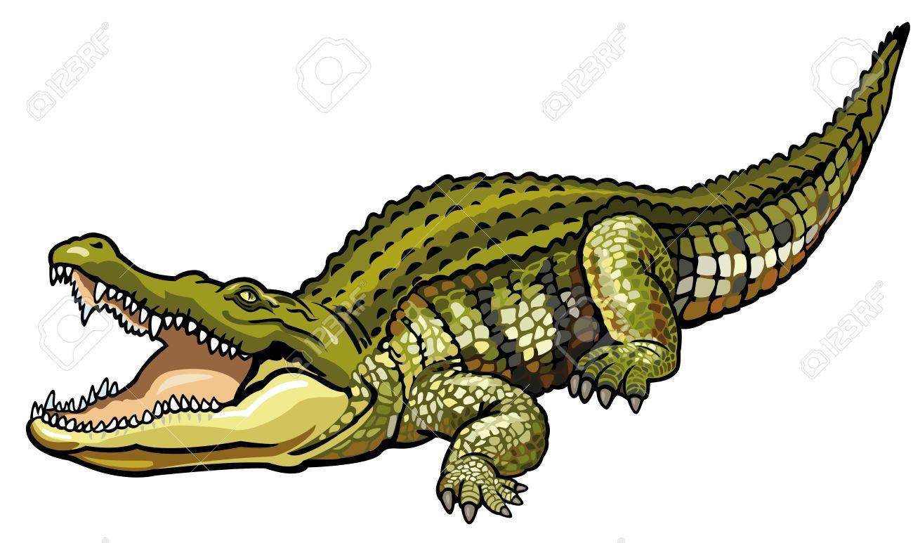 1300x773 Crocodile Clipart Wild Animal