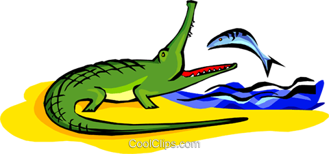 480x226 Crocodile Eating A Fish Royalty Free Vector Clip Art Illustration