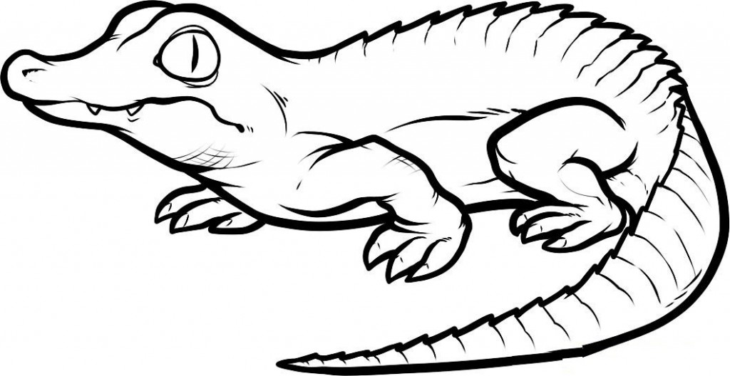 1024x528 Free Printable Crocodile Coloring Pages For Kids