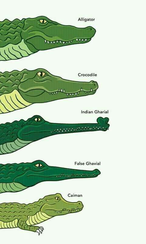 480x802 Best Crocodile Facts Ideas Facts About
