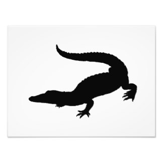 324x324 Crocodiles Photo Prints Amp Photography Zazzle