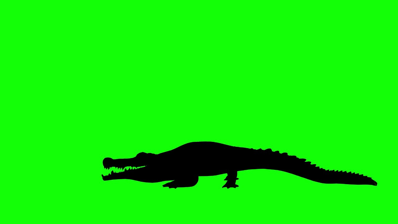 1280x720 Free Hd Video Backgrounds Animal Silhouette Crocodile Attacking