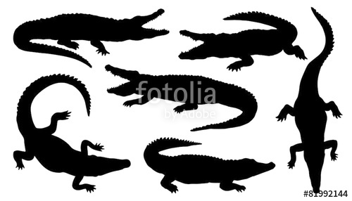 500x286 Crocodile Silhouettes Stock Image And Royalty Free Vector Files
