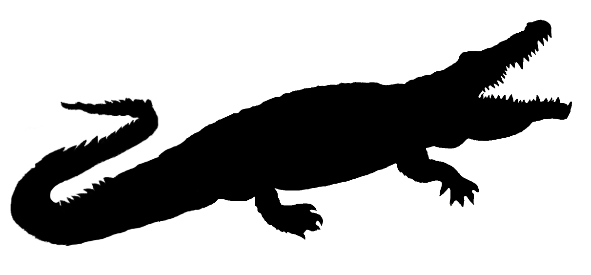 1211x563 Alligator Clipart Shadow
