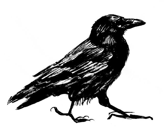 Crow Black And White