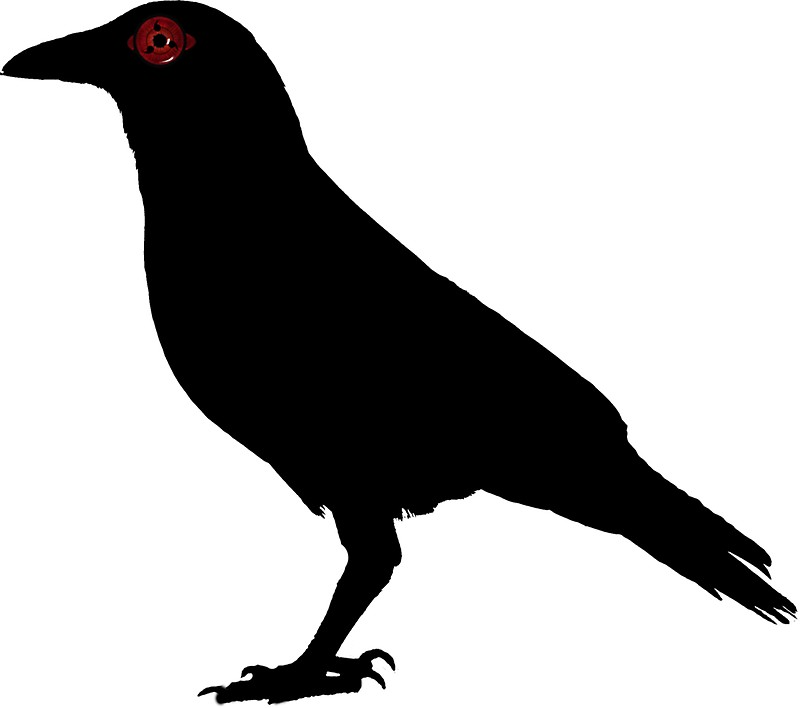 Crow Black And White Free Download Best Crow Black And White On