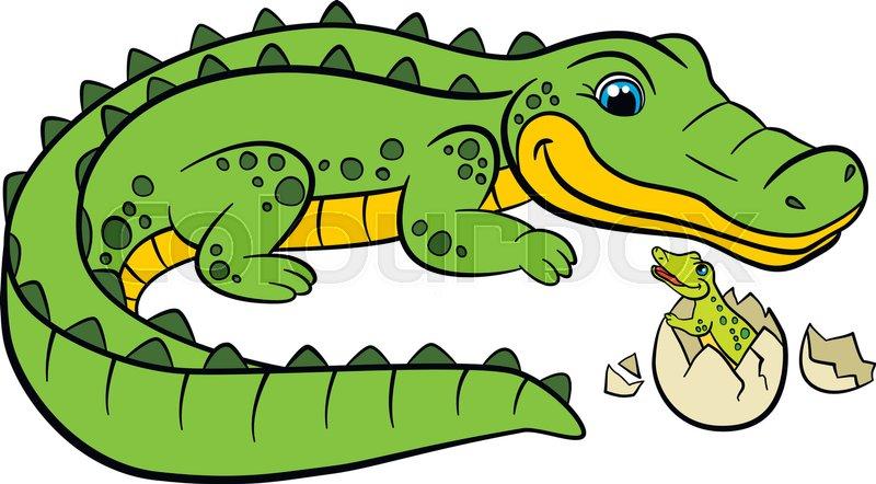 800x442 Cartoon Animals For Kids. Mother Alligator Looks