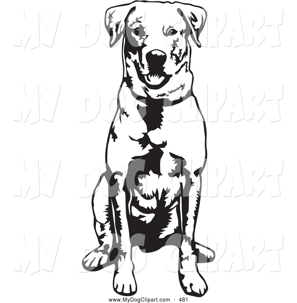 1024x1044 Royalty Free Labrador Stock Dog Designs