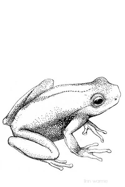 400x600 Best Frog Drawing Ideas Tree Frog Tattoos