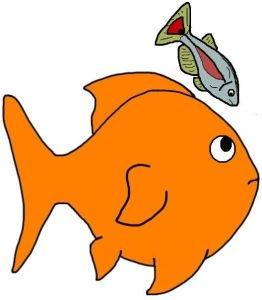 262x300 Goldfish Clipart Many Fish